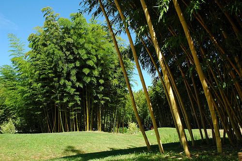 Bambouseraie jard n de bamb en francia - Bambu para jardin ...