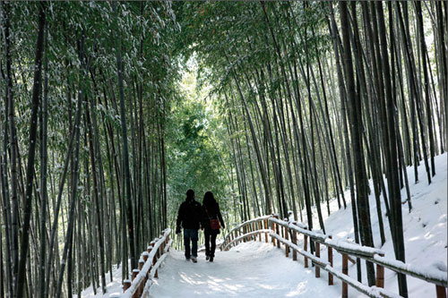 Los bambúes de Damyang, en Corea